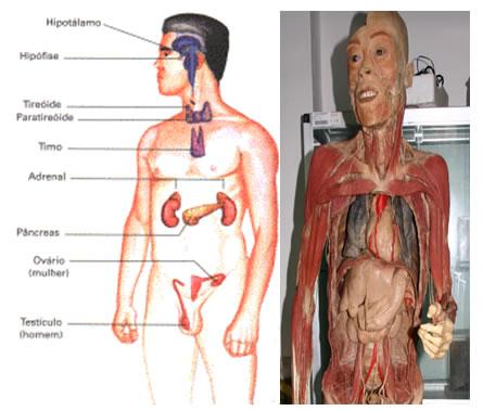 corpo fisico 09